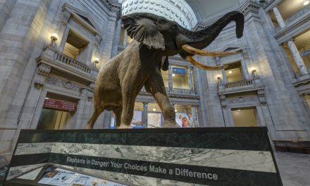 Smithsonian – Tur virtual gratuit prin Muzeul de Istorie Naturală