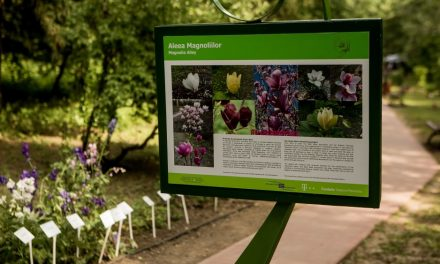 Primul spațiu verde din România cu bănci solare și wifi gratuit în Gradina Botanică